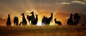 kangaroos Bring Hope to Australia and New Zealand Campaign. 7 days only!